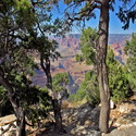 The canyon shot from between two pine trees at the Hermit's Rest overlook