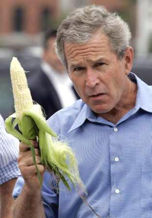 bush_corn.jpg