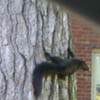 All I wanted was to get a good shot of a black squirrel, but I was rudely denied